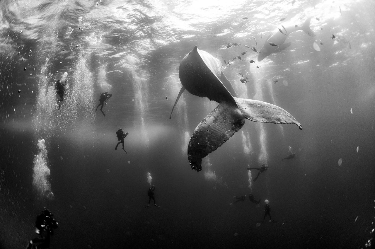 Whale and divers