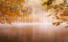 Lake in the forest in autumn