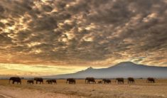 A herd of elephants in Amboseli National Park, Kenya.