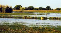 Lake Bangwelo, Zambia
