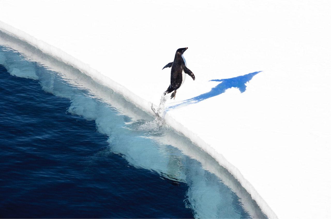 Penguin Leaping. Picture: John Weller