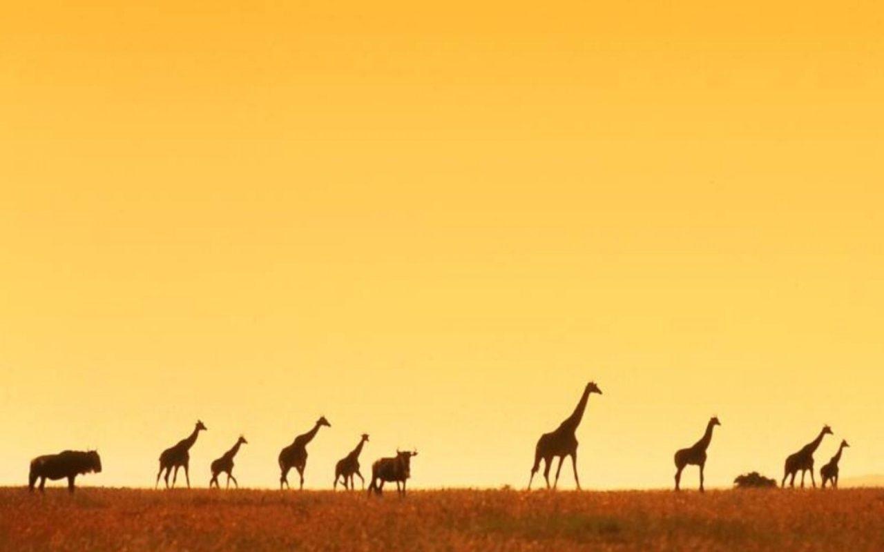 African animals in the savanna