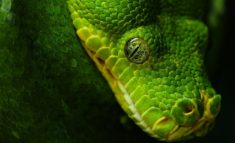 Green snake, very dangerous!