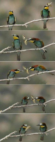 Birds loving