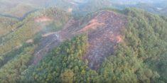 Les forêts dans le monde en 2016, par la FAO