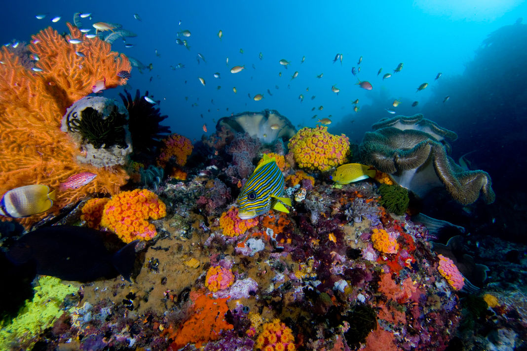 Coral reef in Raja Ampat, Indonesia