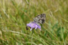 Rencontre d'un papillon et une sauterelle – Brut de Pomme