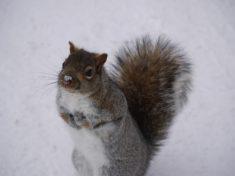 Écureuil – Brut de Pomme