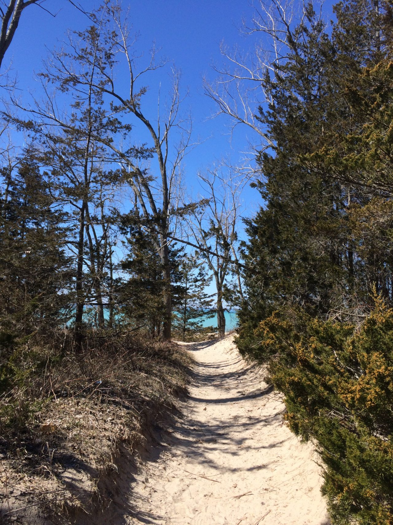 Path to the blue