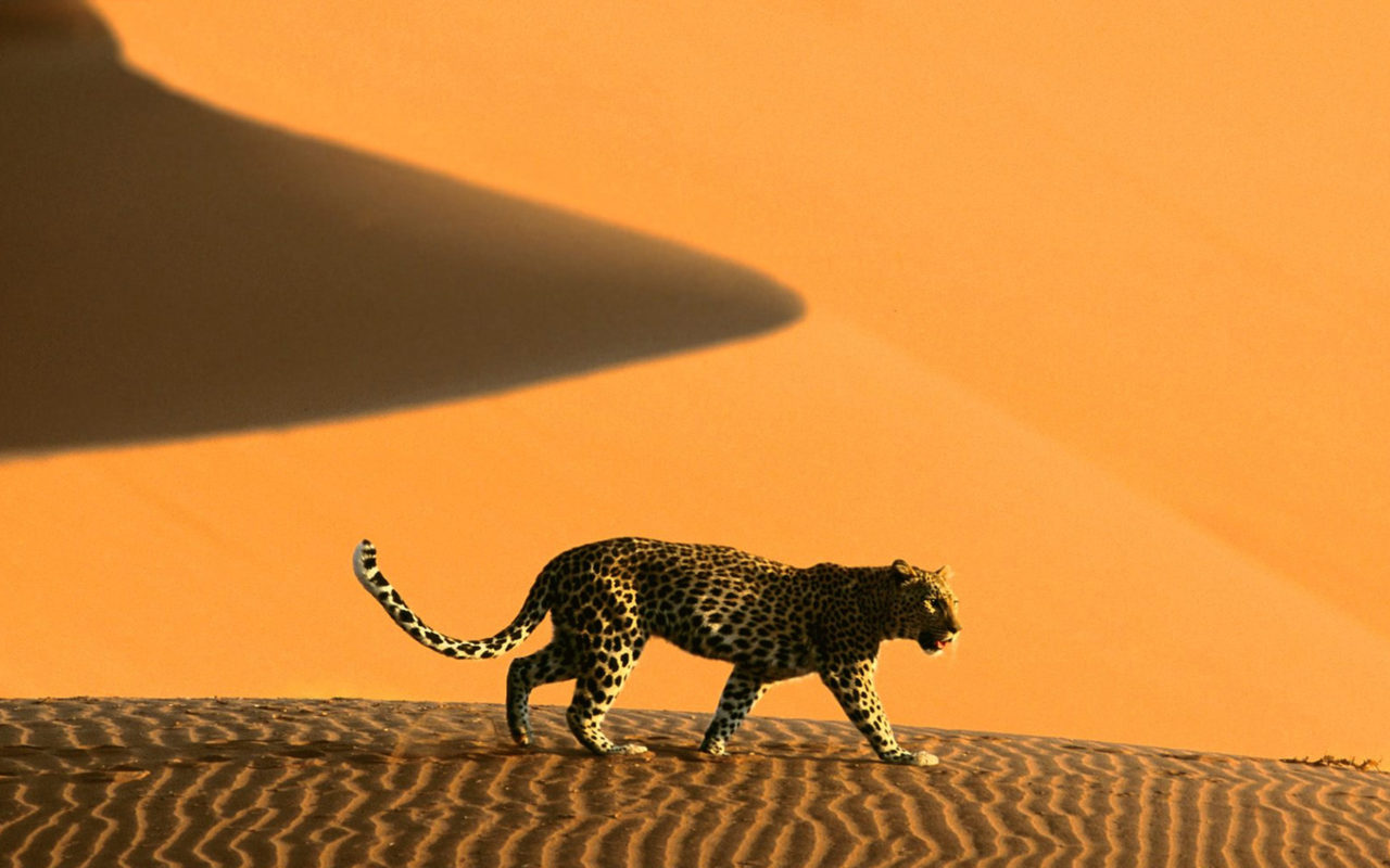 Leopard in Namib Desert – Most Beautiful Picture of the Day: May 4, 2017 – Most Beautiful Picture