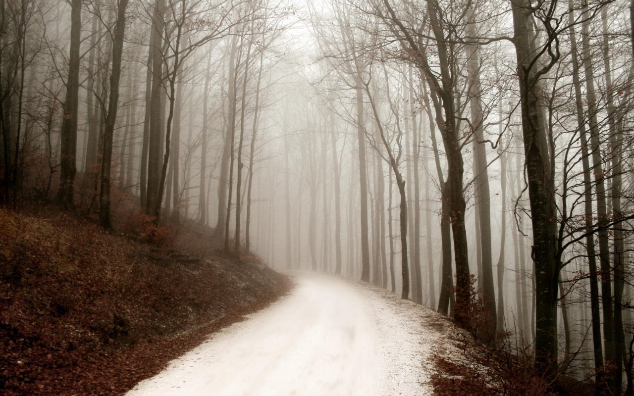 Forest Path in Winter – Most Beautiful Picture of the Day: June 14, 2017 – Most Beautiful Picture