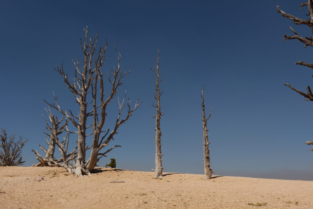 Dead Trees in the Desert – Most Beautiful Picture of the Day: July 8, 2017 – Most Beautiful Picture