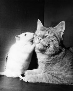 Mouse and Cat – Most Beautiful Picture of the Day: August 18, 2017 – Most Beautiful Picture