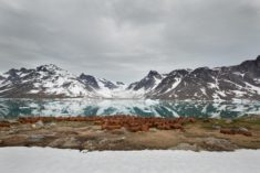 US Air Forces abandoned base Bluie East Two polluting Greenland – Most Beautiful Picture of the  ...