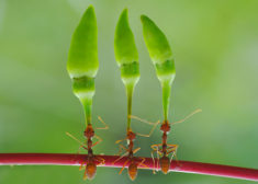 Antz – Most Beautiful Picture of the Day: September 26, 2017 – Most Beautiful Picture