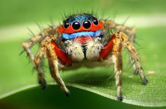 Jumping Spider – Most Beautiful Picture of the Day: September 22, 2017 – Most Beautiful Picture