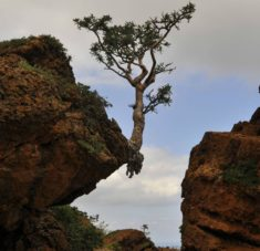 Tree – Most Beautiful Picture of the Day: September 29, 2017 – Most Beautiful Picture