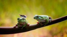 Frogs and butterfly – Most Beautiful Picture of the Day: October 10, 2017 – Most Beautiful ...