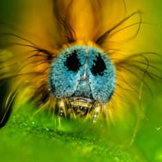 Insect – Most Beautiful Picture of the Day: October 1, 2017 – Most Beautiful Picture
