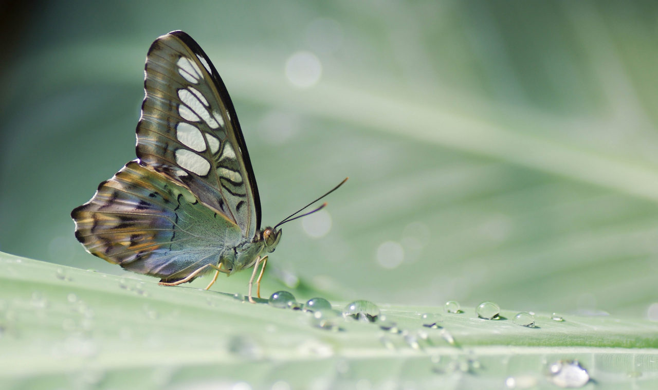 Tropical Butterfly – Most Beautiful Picture of the Day: October 16, 2017 – Most Beautiful  ...