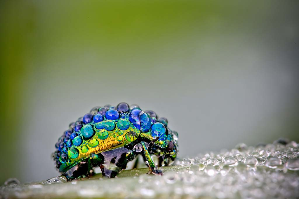 Insect under the rain
