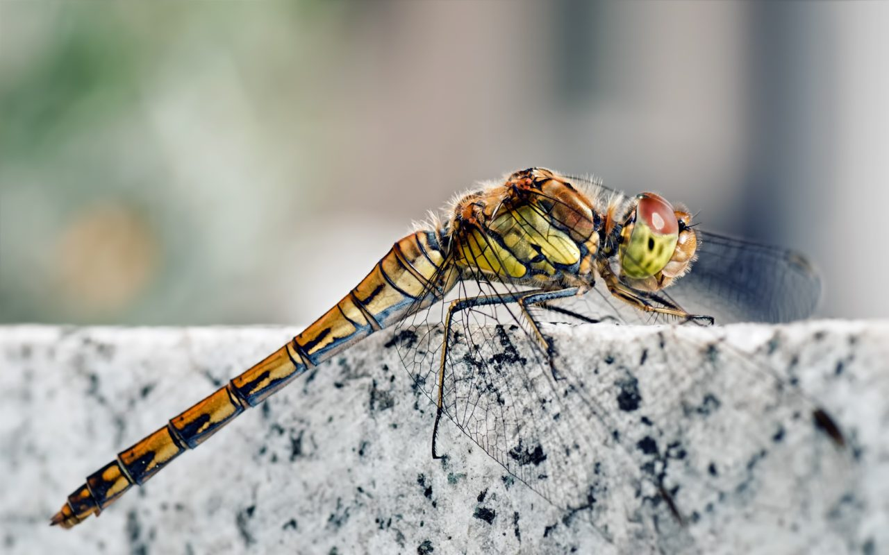 Dragonfly – Most Beautiful Picture of the Day: November 3, 2017 – Most Beautiful Picture
