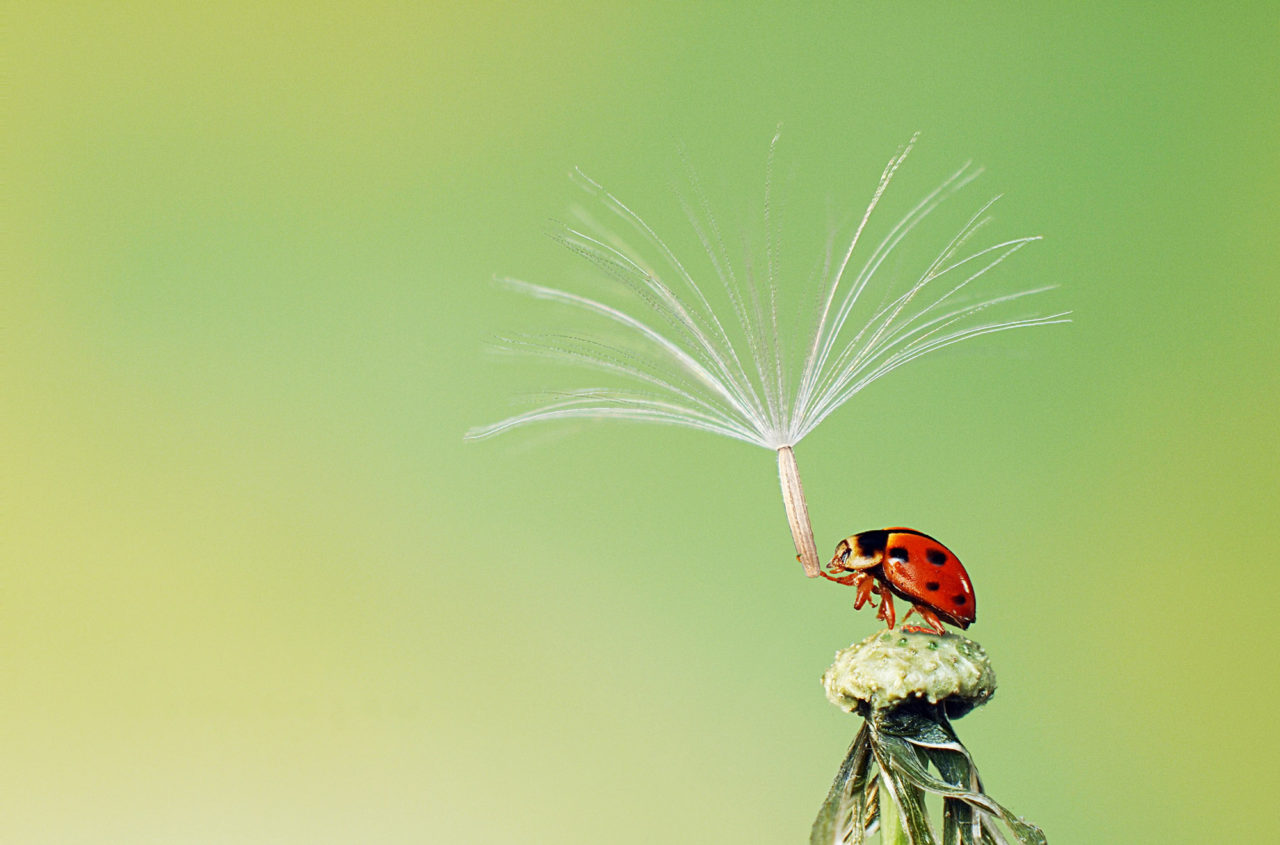 Ladybug – Most Beautiful Picture of the Day: November 4, 2017 – Most Beautiful Picture