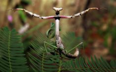 Mantis gymnastics – Most Beautiful Picture of the Day: November 8, 2017 – Most Beautiful P ...