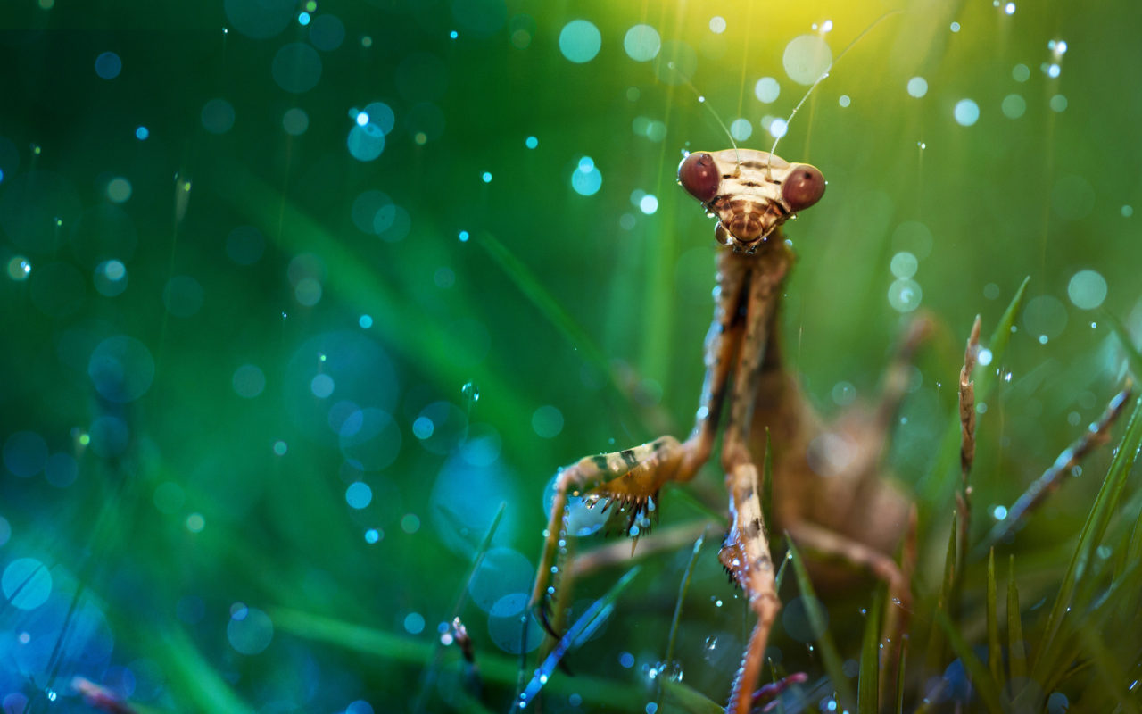 Mantis – Most Beautiful Picture of the Day: November 25, 2017 – Most Beautiful Picture