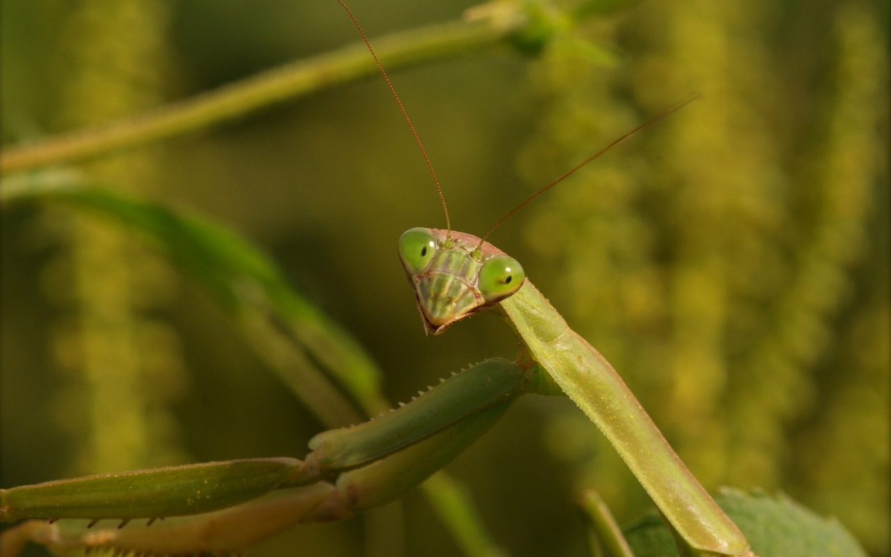 Mantis smiles – Most Beautiful Picture of the Day: November 9, 2017 – Most Beautiful Picture