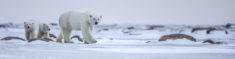 Top 2 bucket list experiences in the Arctic: Polar Bears & Northern Lights | Arctic Kingdom