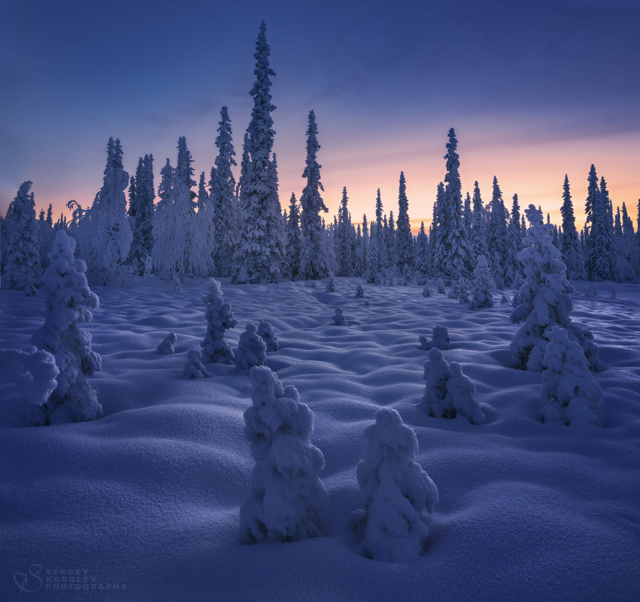 Forest under the snow