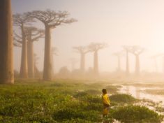Baobabs, Madagascar – Most Beautiful Picture of the Day: December 8, 2017 – Most Beautiful ...