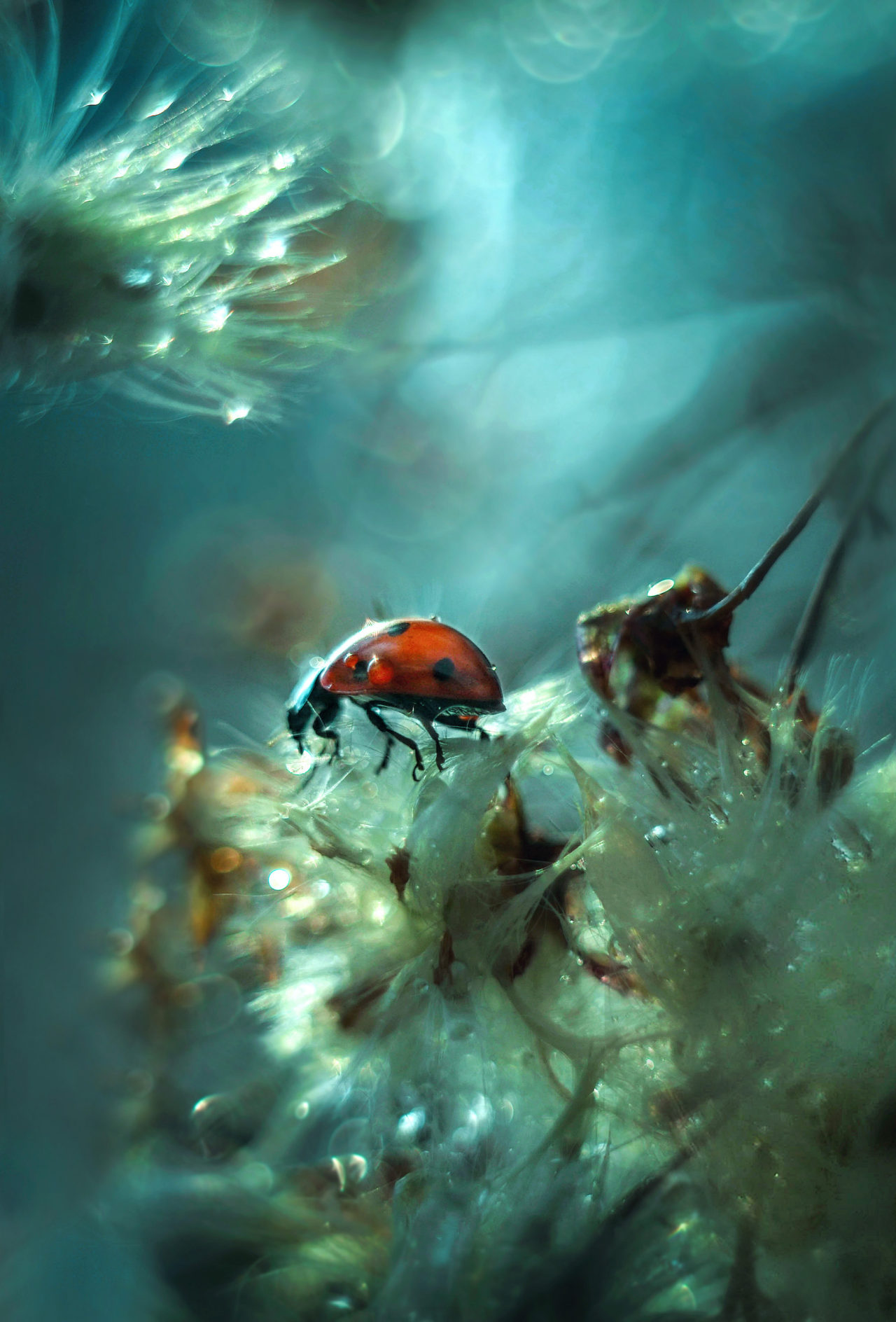 Beetle – Most Beautiful Picture of the Day: December 25, 2017 – Most Beautiful Picture