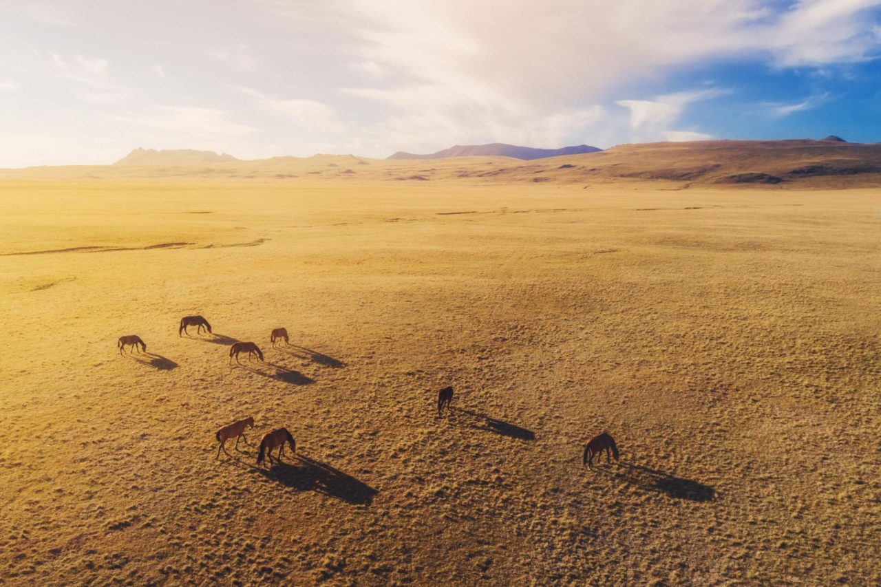 Horses, Kyrgyzstan