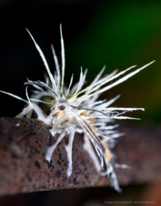 Moth killed by cordyceps fungus – Most Beautiful Picture of the Day: December 4, 2017 – Mo ...