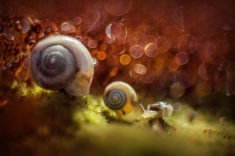 Snails – Most Beautiful Picture of the Day: December 24, 2017 – Most Beautiful Picture
