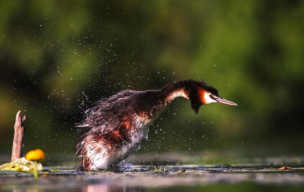 Bird taking flight