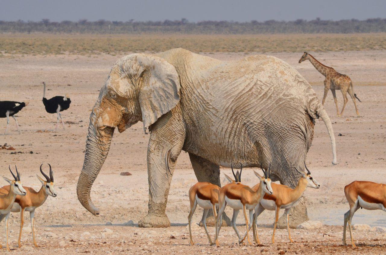 Animals in the African savanna