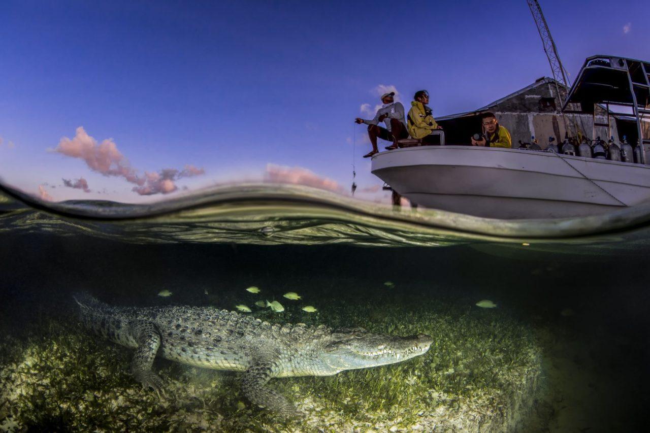 Hidden Crocodile – Most Beautiful Picture