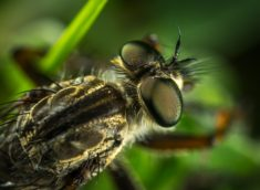 Insect eyes close-up