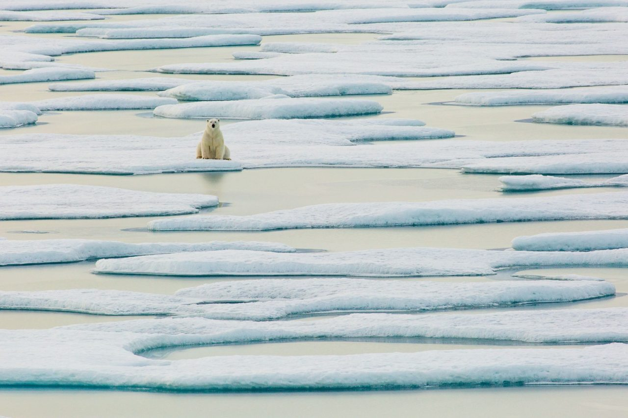 Polar bear lost (or not) – Most Beautiful Picture