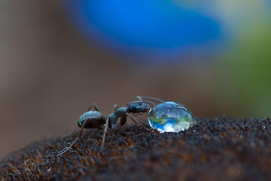 Ant drinking – Most Beautiful Picture