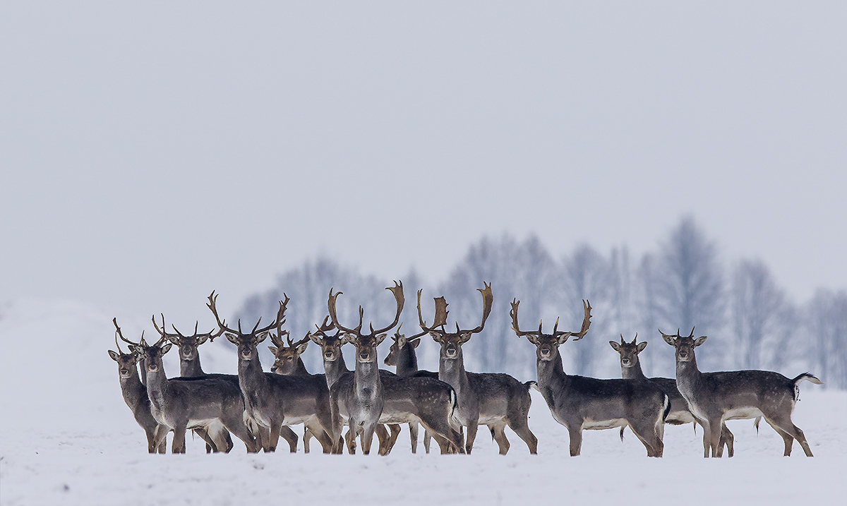 Deers – Most Beautiful Picture