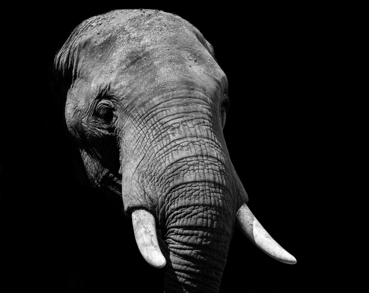 Elephant, Uganda – Most Beautiful Picture
