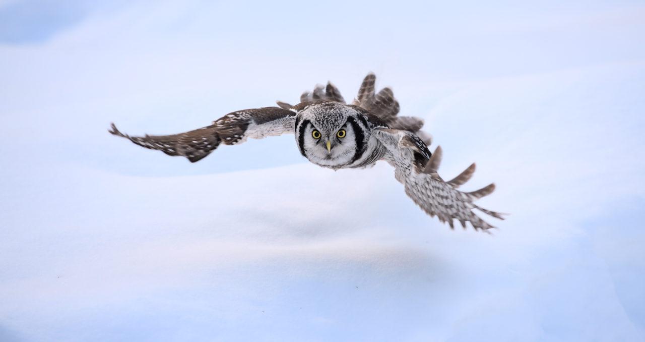 Low flying hunter