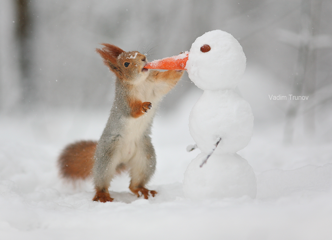 The snowman and the squirrel