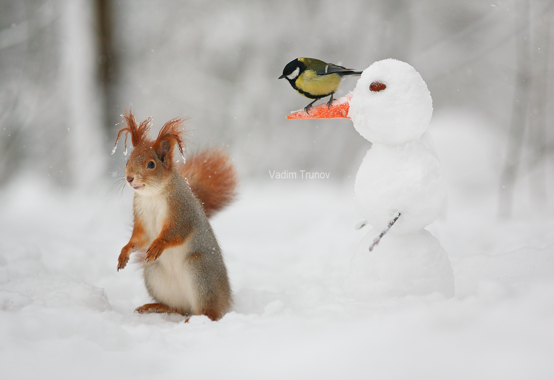 The snowman, the squirrel and the bird