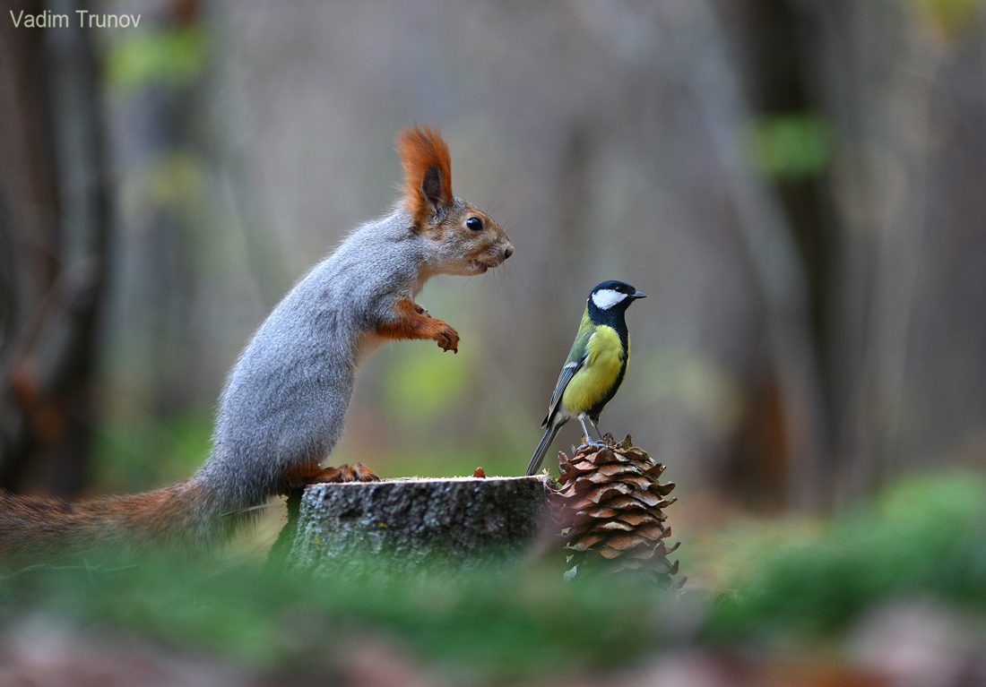 The squirrel and the bird