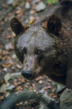 Bear – Most Beautiful Picture